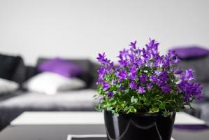 Jak urządzić garderobę w niedużym mieszkaniu